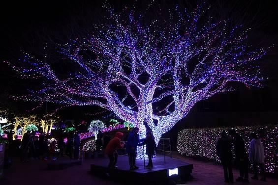 a tree lit up in the middle of the flower and herb garden in jeju