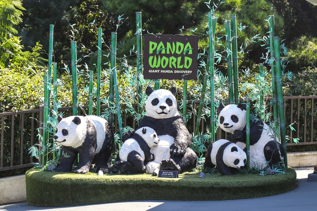 Everland Theme Park Zoo_Panda